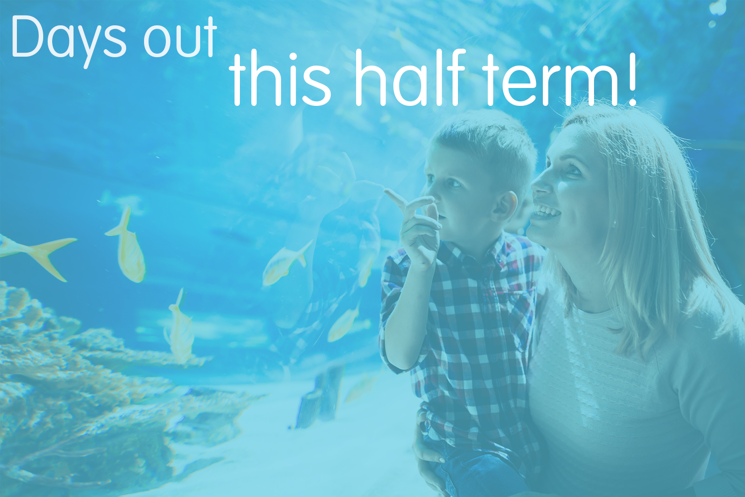 Have fun this half-term